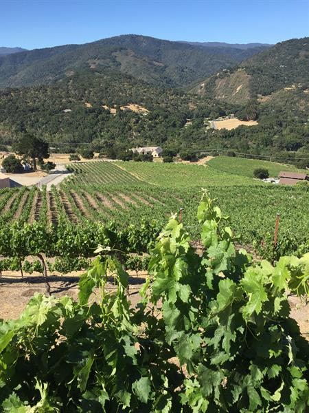 The View From Atop Saunders Vineyard