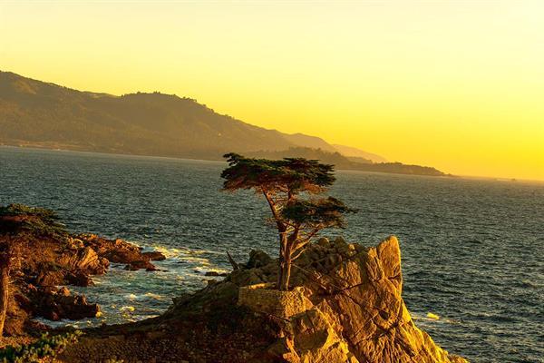 Scenic Coastline Tours - Lone Cypress on 17 Mile Drive
