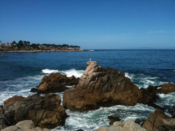 Scenic Coastline Tours - Monterey