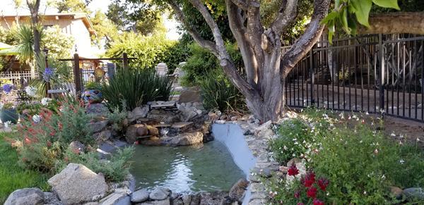 Poolside Pond