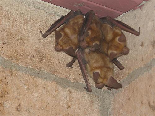 Bats in a corner