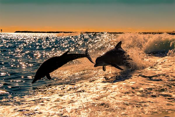 Famous Dolphin Jumping Photo