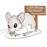 Beach Mice Provide Big Benefit at the National Seashore