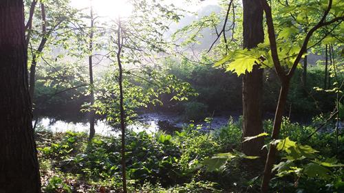 Babbling Brook!