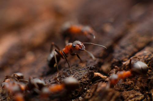 Gallery Image ants_-_Copy.jpg
