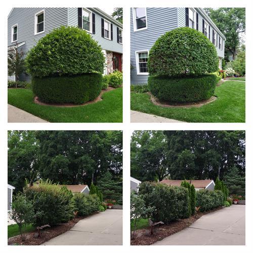 Gallery Image bushes_trimmed.jpg