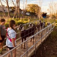 Goat Fest 2021