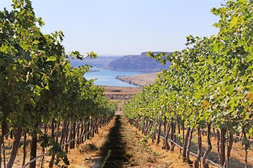 Trinidad Vineyard