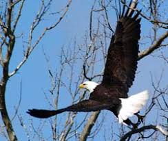 Amazing site-seeing right across the street at Charles Point. Our area is known for Bald Eagle migration and bird watching.
