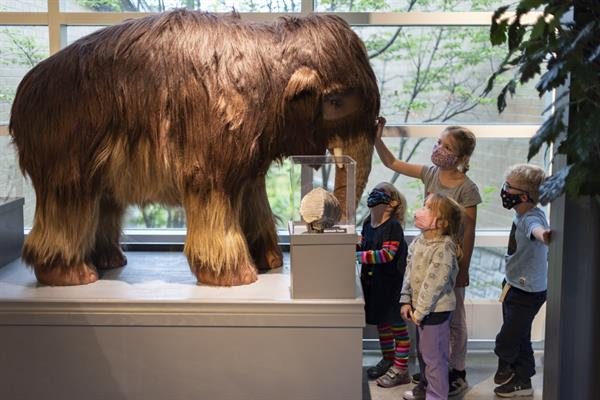 Come face-to-face with a baby mammoth!