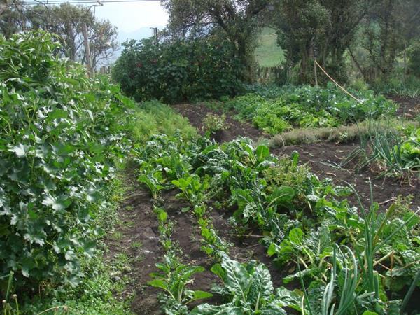In 3-5 years, the soil around your organic food garden can create its own self sustaining ecosystem that thrives!