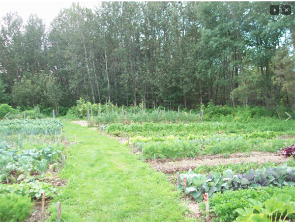 Market Gardens produce large quantities of food while using techniques like permaculture, organic gardening, and partner planting to ensure that food is grown in a healthy way