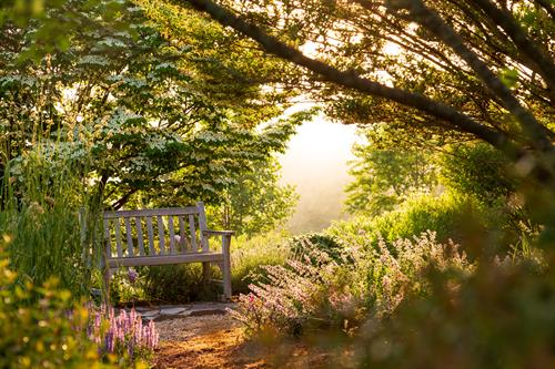 Gallery Image Brierley-Hill-T-Gardens-10.jpg