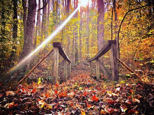 Gallery Image EA_Hiking.jpg