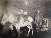 Horses and donkeys were used to tram out the ore.