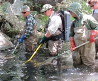 Conducting fish rescues in the Carmel River