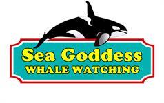 Sea Goddess Whale Watching