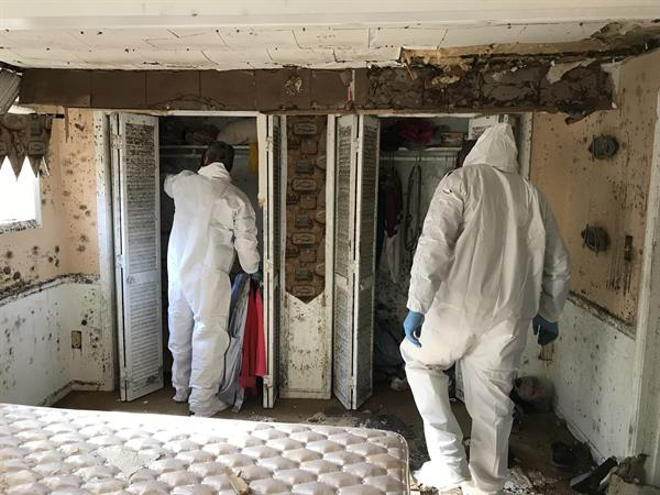 SERVPRO of Alexander & Caldwell Counties performs mold remediation, no matter how extreme the damage is.