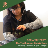 Ask an Expert:  The Tooth About Cats & Dogs with Dr. Vaishali Joshi