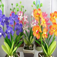 Gallery Image 200x200_Orchids.jpg