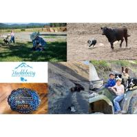 Huckleberry Mountain Invitational Dog Trials
