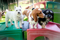 Small Dog Play Yard