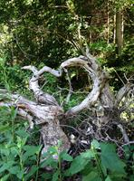 Even the trees seem romantic!