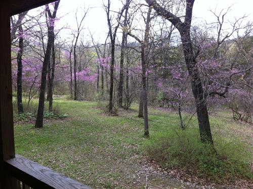 Deck View at Woodland Violets
