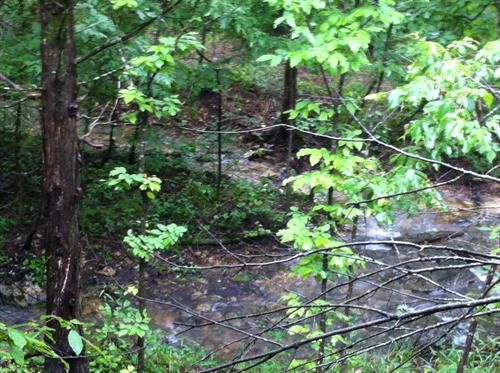 Another view of the branch wet-weather creek in front of Midnight Forrest