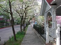 Street view in April.