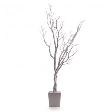 manzanita trees ( white gold silver)