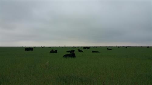 Gallery Image Favorite_Cow_photo_(1).jpg