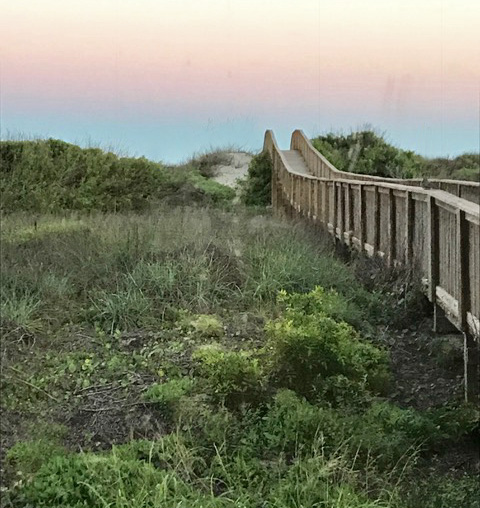 Boardwalk Adjacent to the House