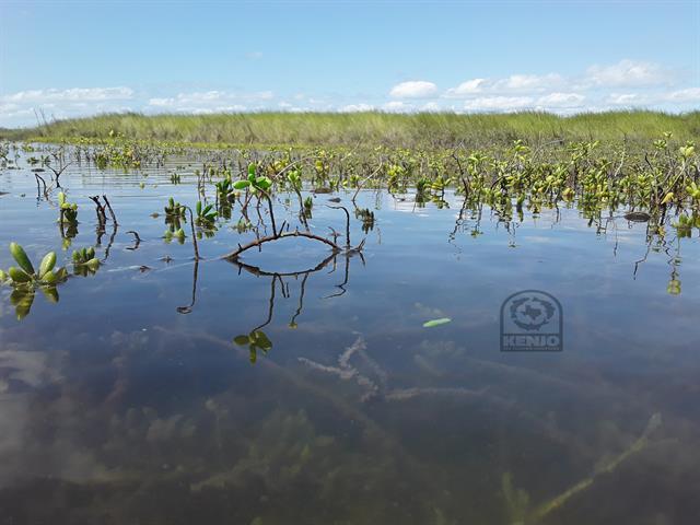 Gallery Image KenjoFly_Texas_Marsh_Flooded_Succulents.jpg