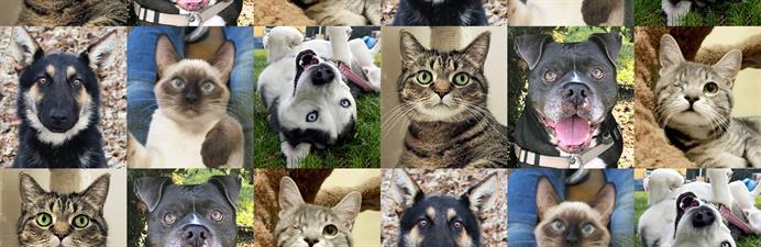Tony La Russa's Animal Rescue Foundation (ARF)