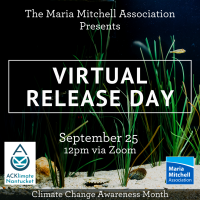 Nantucket Maria Mitchell Association Aquarium Hosts a Virtual Release Day