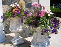 Plantings for seasonal color