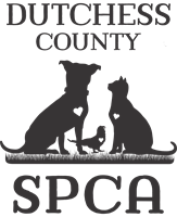 Dutchess County SPCA Welcomes NEW Director of Animal Care