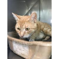 Animal Shelter Pet of the Week: 8-12-19