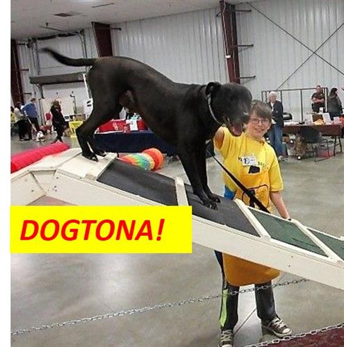 Gallery Image Dogtona_Aframe.jpg