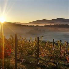 Beliveau Farm Winery