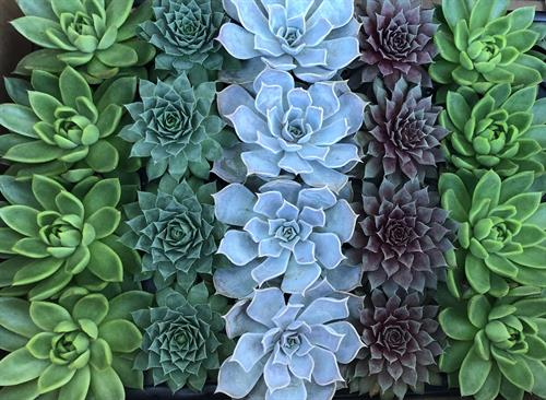 We sell succulents and have Succulent Socials.