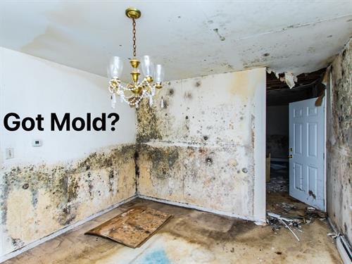 G2 is a State Licensed Mold Company Located in McKinney Texas.