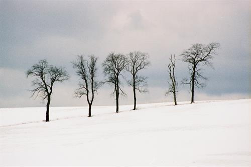 Gallery Image Winter's_Six.jpg