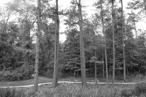 B&W Path at Nelson Pond in Moon Park
