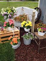 Gallery Image Cottage_hanging_baskets_garden_shed_pic.jpg