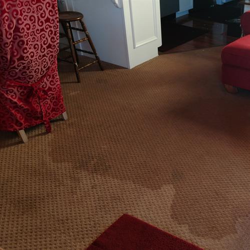 Gallery Image wet_carpet.jpg