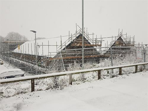 Sowenna in the snow, winter 2019