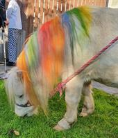 Unicorn visits Penberthy Residential Home