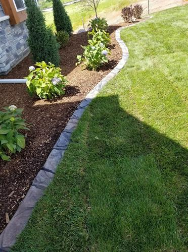 Landscape concrete edging, plantings